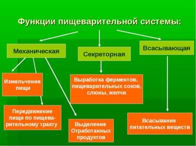 Функции пищеварительной системы: Механическая Секреторная Всасывающая Измельч...