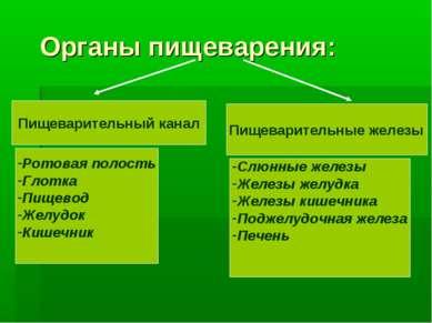 Органы пищеварения: Пищеварительный канал Пищеварительные железы Ротовая поло...