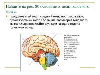 Найдите на рис. 80 основные отделы головного мозга: продолговатый мозг, средн...