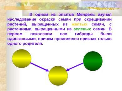 В одном из опытов Мендель изучал наследование окраски семян при скрещивании р...