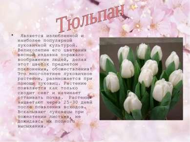 Является излюбленной и наиболее популярной луковичной культурой. Великолепие ...