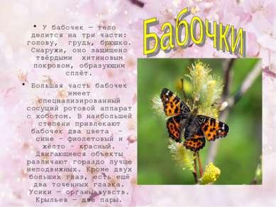 У бабочек — тело делится на три части: голову, грудь, брюшко. Снаружи, оно за...