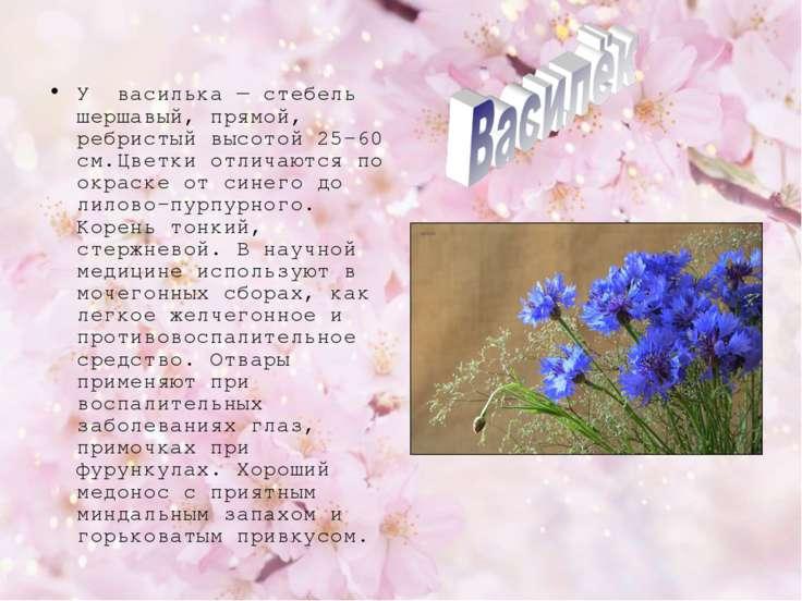 У василька — стебель шершавый, прямой, ребристый высотой 25-60 см.Цветки отли...