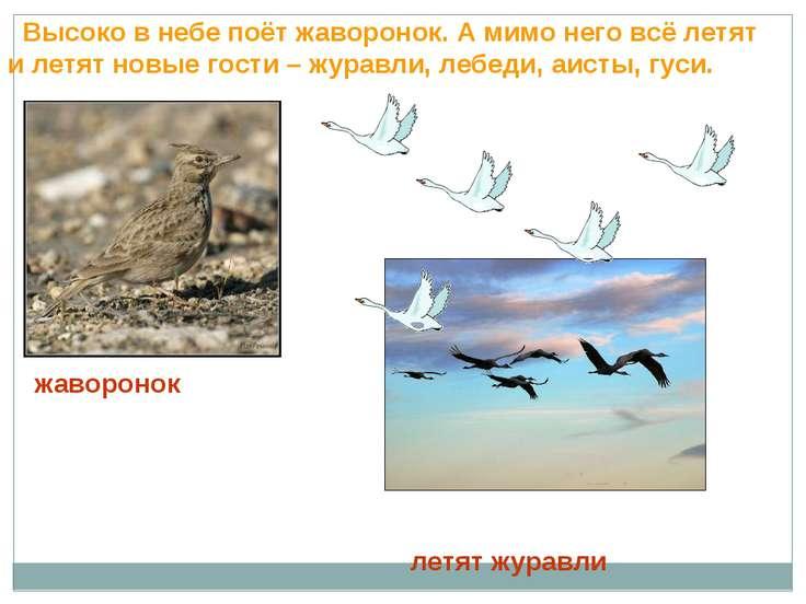 Высоко в небе поёт жаворонок. А мимо него всё летят и летят новые гости – жур...