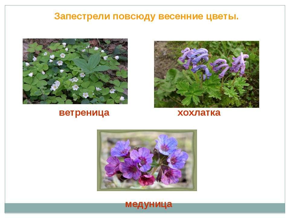 Запестрели повсюду весенние цветы. ветреница хохлатка медуница