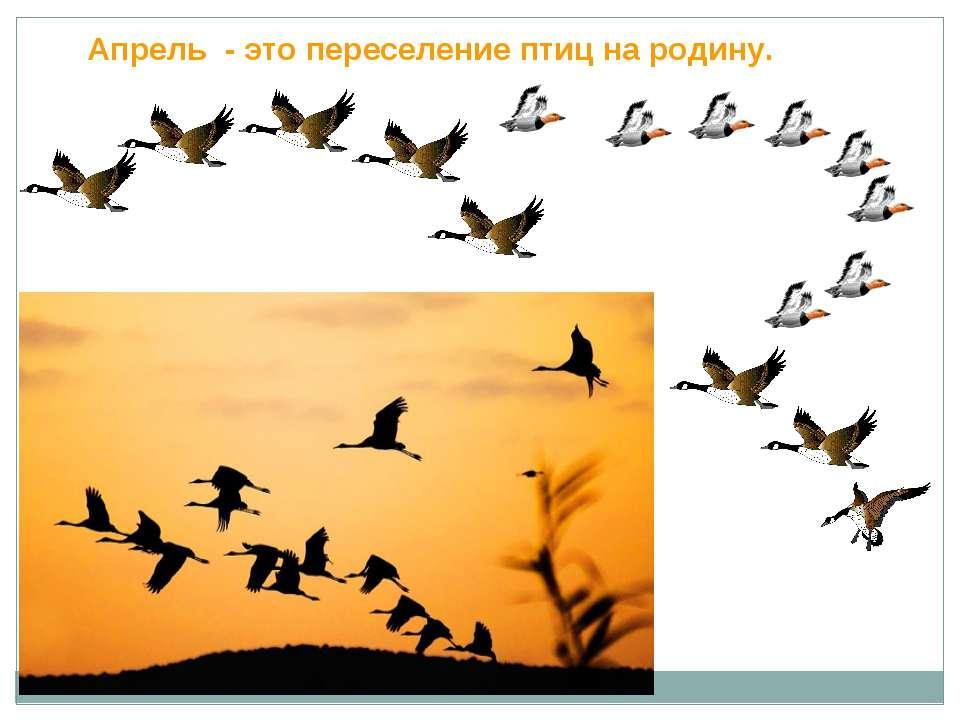Апрель - это переселение птиц на родину.