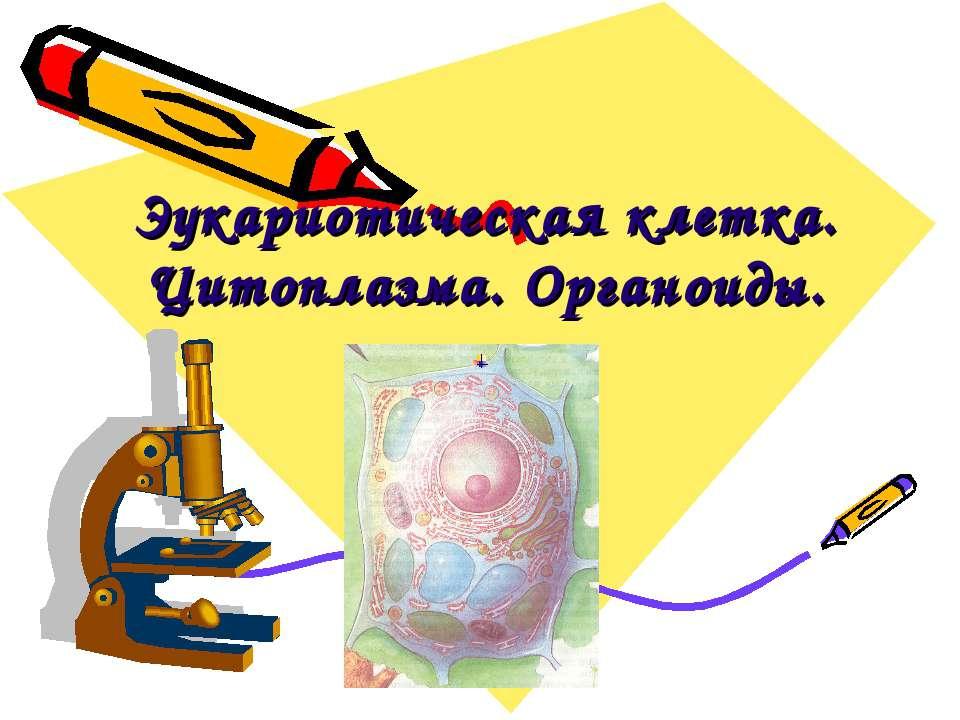 Эукариотическая клетка. Цитоплазма. Органоиды.
