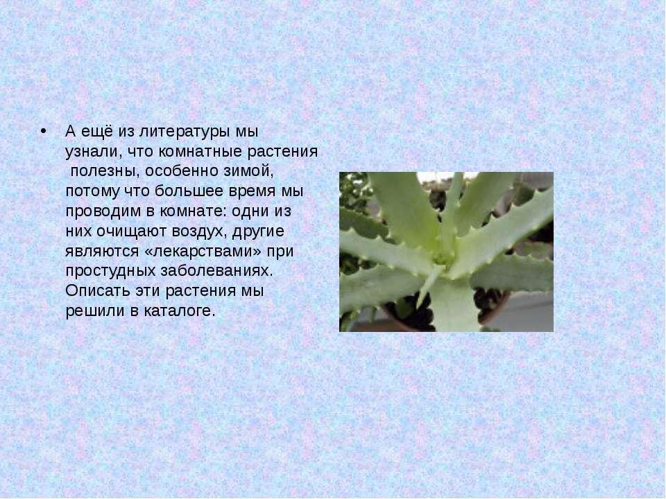 А ещё из литературы мы узнали, что комнатные растения полезны, особенно зимой...