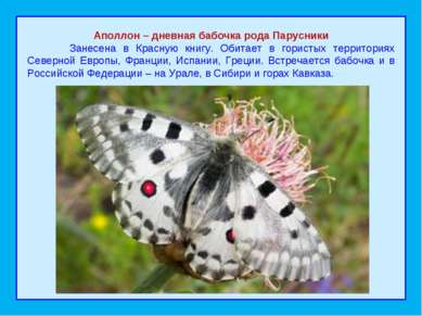 Аполлон – дневная бабочка рода Парусники Занесена в Красную книгу. Обитает в ...