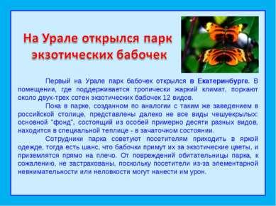 Первый на Урале парк бабочек открылся в Екатеринбурге. В помещении, где подде...