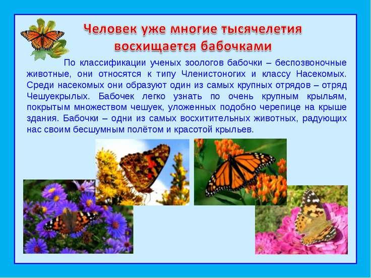 По классификации ученых зоологов бабочки – беспозвоночные животные, они относ...