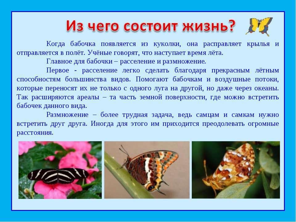 Когда бабочка появляется из куколки, она расправляет крылья и отправляется в ...
