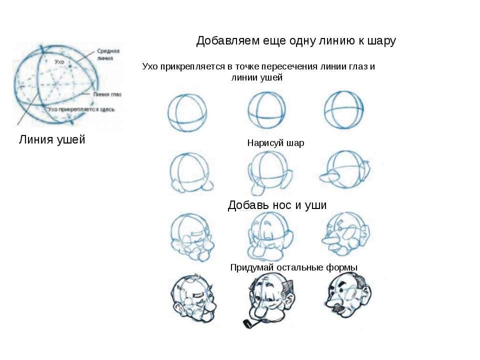 Ухо прикрепляется в точке пересечения линии глаз и линии ушей Добавляем еще о...