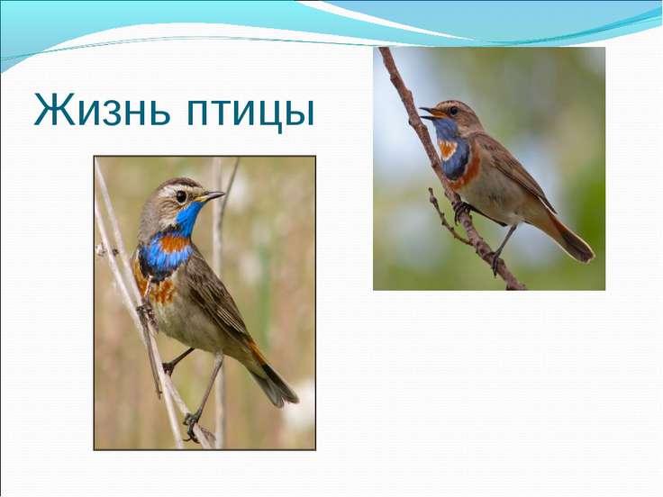 Жизнь птицы