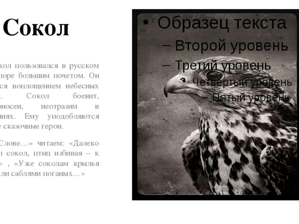 Сокол Сокол пользовался в русском фольклоре большим почетом. Он считался вопл...