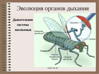 Эволюция органов дыхания Дыхательная система насекомых ГБОУ № 327 ГБОУ № 327