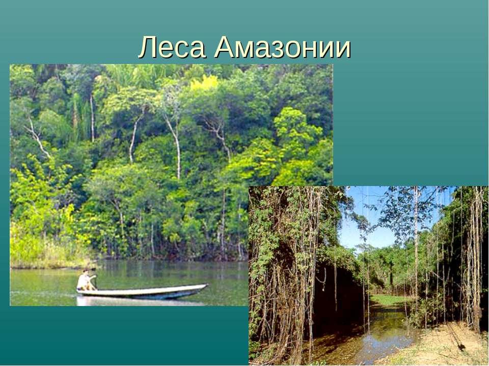 Леса Амазонии