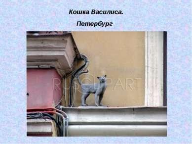 Кошка Василиса. Петербург