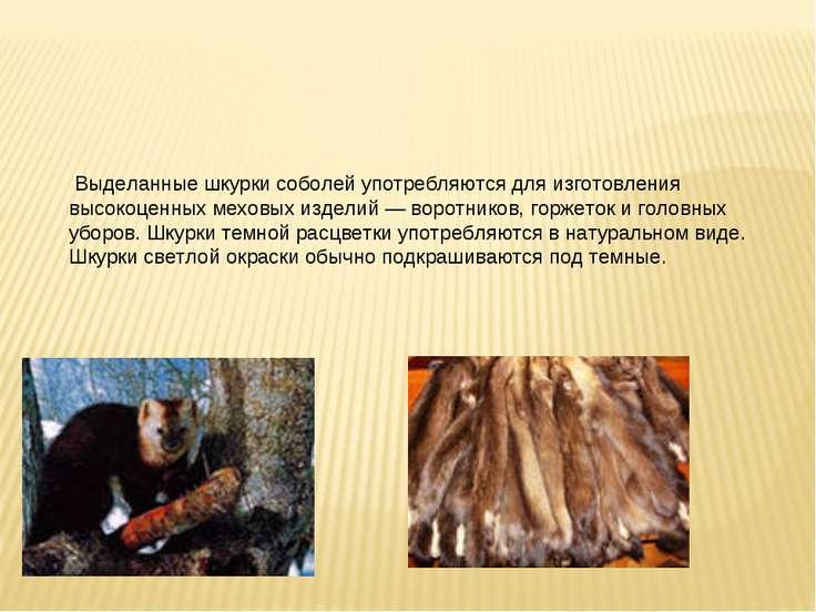 Выделанные шкурки соболей употребляются для изготовления высокоценных меховых...