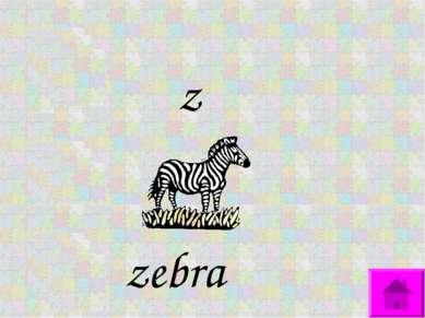 z zebra