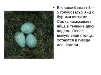 В кладке бывает 3—5 голубоватых яиц с бурыми пятнами. Самка насиживает яйца в...