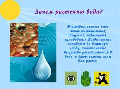 Зачем растению вода? В каждом семени есть запас питательных веществ, небольша...