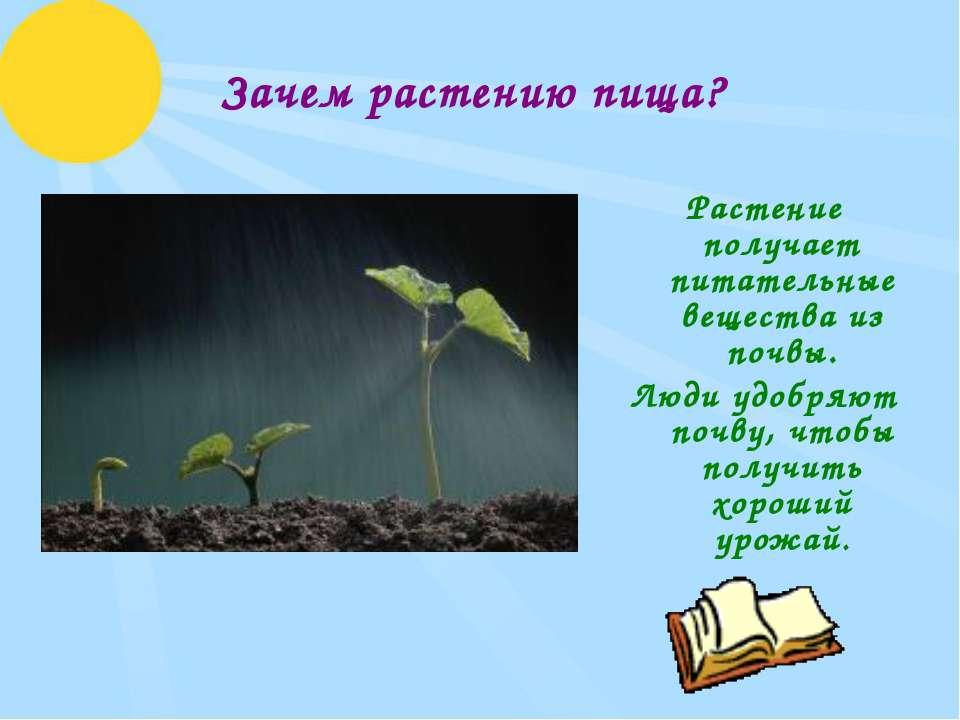 Зачем растению пища? Растение получает питательные вещества из почвы. Люди уд...