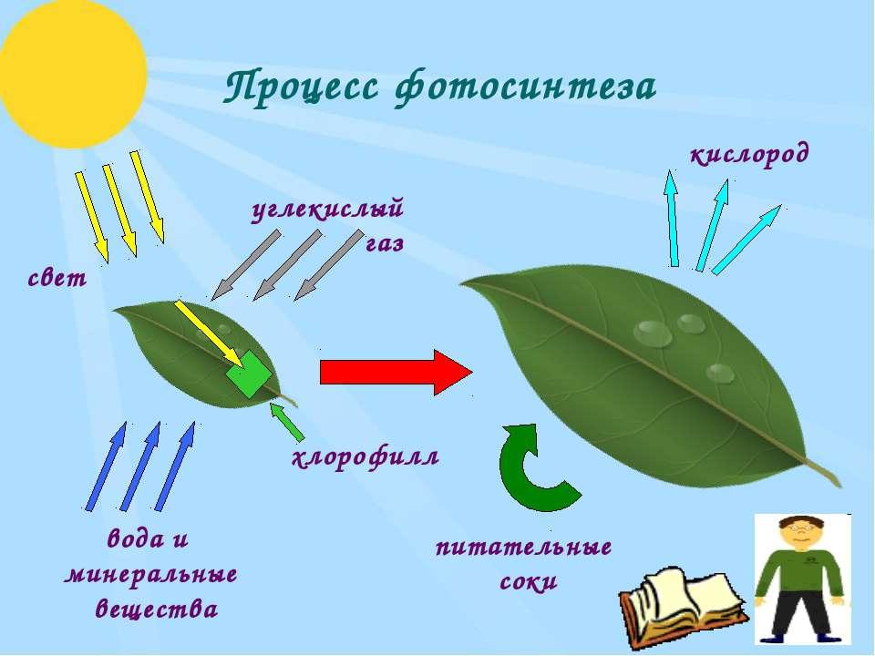 Процесс фотосинтеза углекислый газ свет вода и минеральные вещества кислород ...
