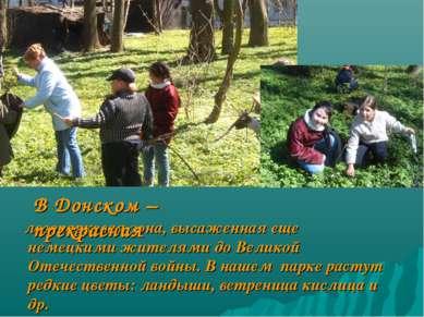 лесопарковая зона, высаженная еще немецкими жителями до Великой Отечественной...