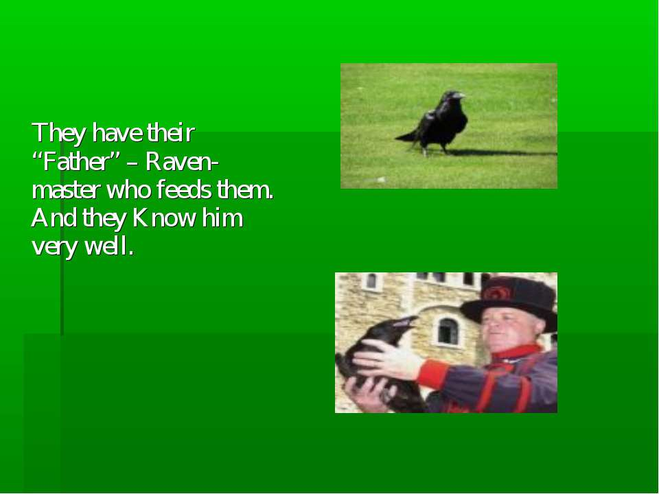 "They have their ""Father"" – Raven-master who feeds them. And they Know him ver..."
