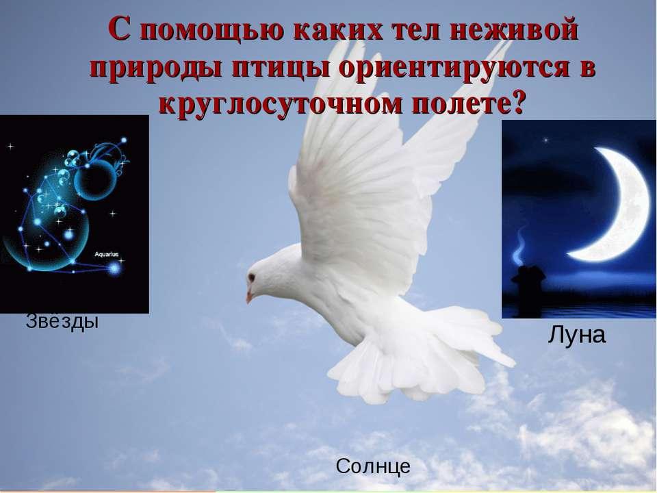 С помощью каких тел неживой природы птицы ориентируются в круглосуточном поле...