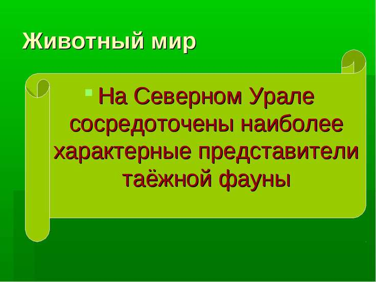 Животный мир На Северном Урале сосредоточены наиболее характерные представите...