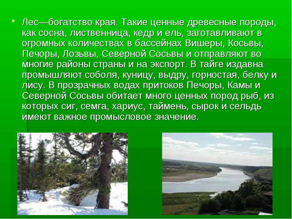 Лес—богатство края. Такие ценные древесные породы, как сосна, лиственница, ке...