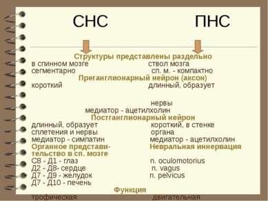 СНС ПНС Структуры представлены раздельно в спинном мозге ствол мозга сегмента...