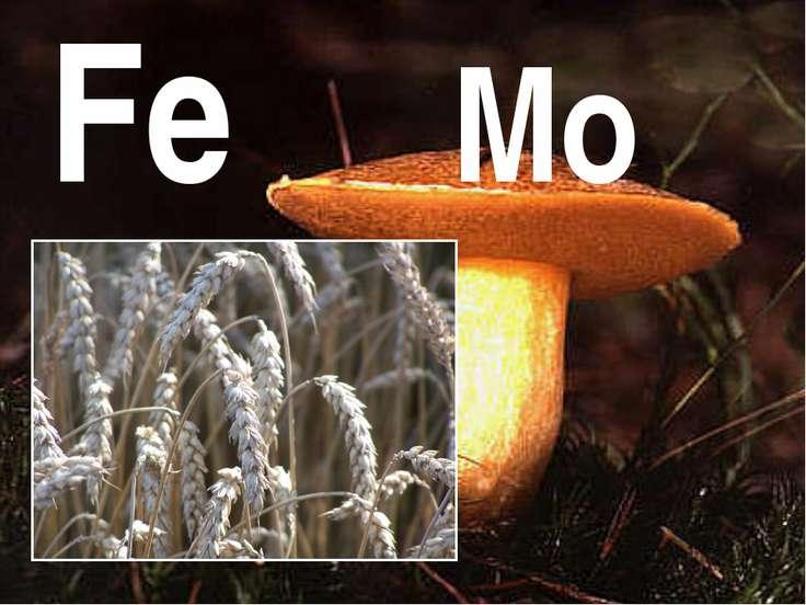 Fe Mo