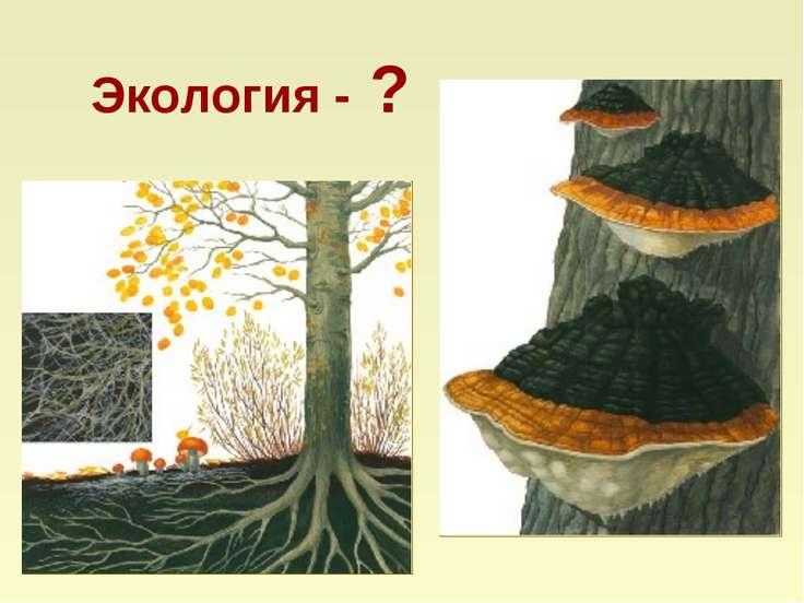 Экология - ?