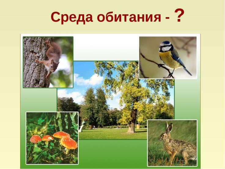 Среда обитания - ?