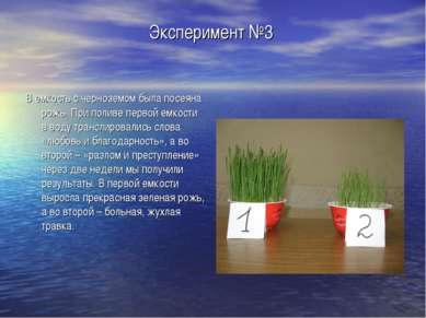 Эксперимент №3 В емкость с черноземом была посеяна рожь. При поливе первой ем...