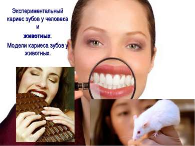 Экспериментальный кариес зубов у человека и животных. Модели кариеса зубов у ...