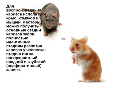 Для воспроизведения кариеса используют крыс, хомяков и мышей, у которых можно...