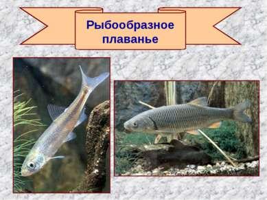 Рыбообразное плаванье