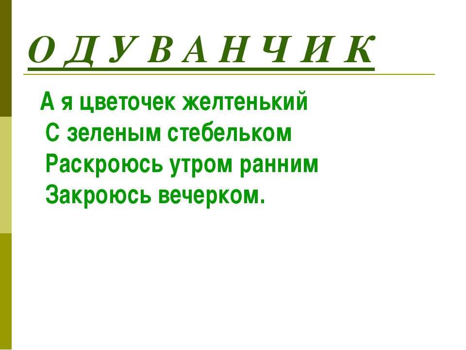 О Д У В А Н Ч И К А я цветочек желтенький С зеленым стебельком Раскроюсь утро...