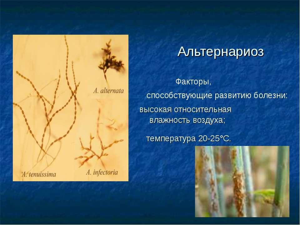 Альтернариоз Факторы, способствующие развитию болезни: высокая относительная ...