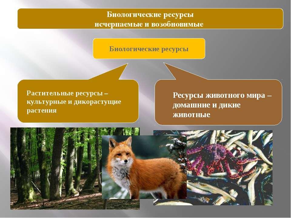 Лесные ресурсы планеты Размеры лесных площадей – 4,1 млн га Запасы древесины ...