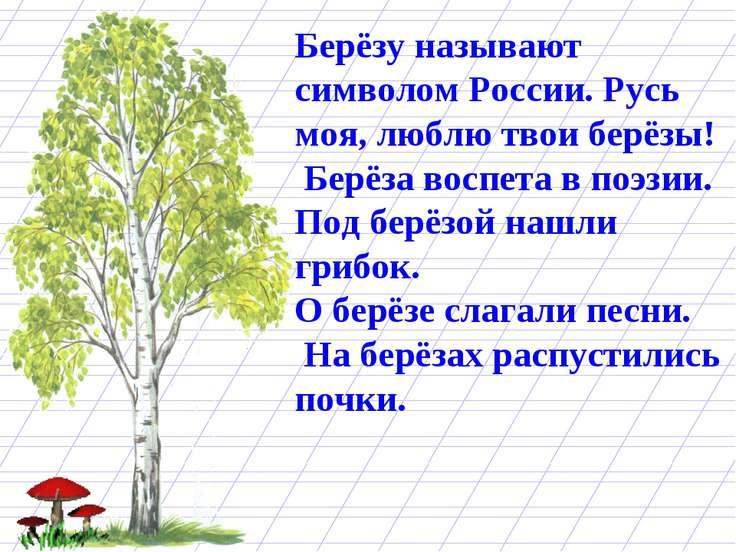 Берёзу называют символом России. Русь моя, люблю твои берёзы! Берёза воспета ...