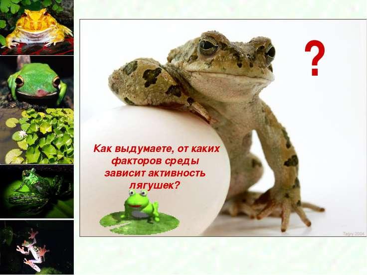 Как выдумаете, от каких факторов среды зависит активность лягушек? ?