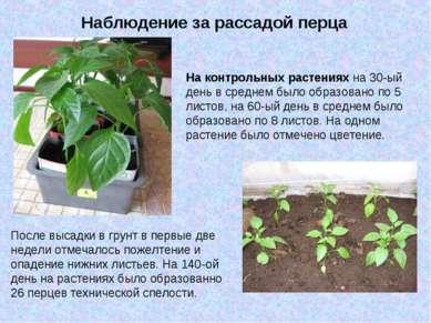 Наблюдение за рассадой перца На контрольных растениях на 30-ый день в среднем...