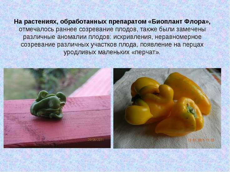 На растениях, обработанных препаратом «Биоплант Флора», отмечалось раннее соз...