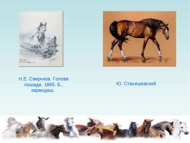 Н.Е. Сверчков. Голова лошади. 1865. Б., карандаш. Ю. Станишевский