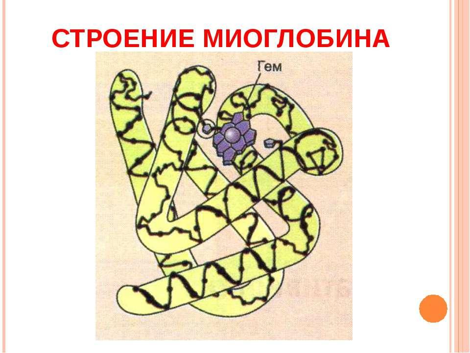 Миоглобин фото